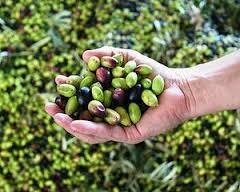 market segmentation of olive oil company Research and markets: global olive oil market 2014-2018 - borges, colavita, deoleo & ybarra lead the market market segmentation by end-users.