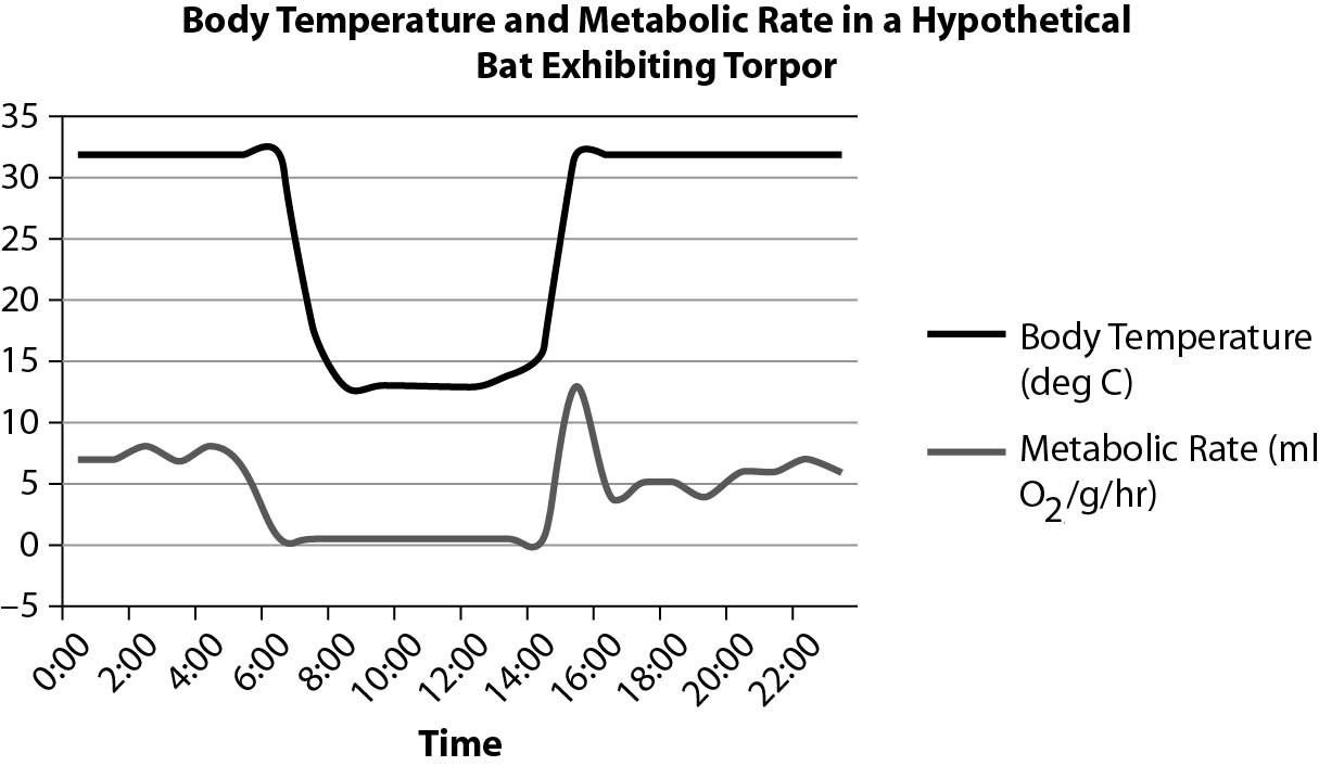 temperature and metabolic rate relationship